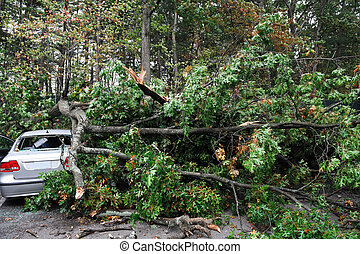 car damaged by fallen tree during s