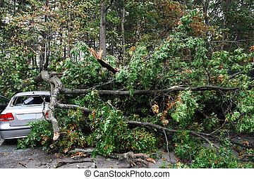 car, danificado, por, árvore caída, durante, s