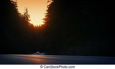 Car Drives In Forest On Summer Evening