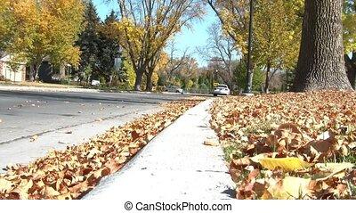 Car Driving Through Leaves Fast - Car drives through brown...