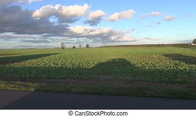 car evening shadow on autumn field