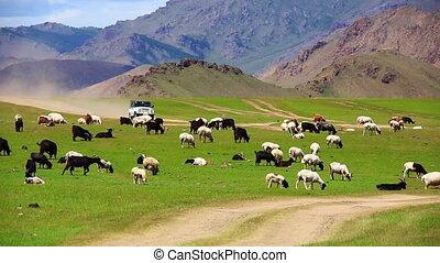 Car going beautiful mongolian offroad - mini Van going at...