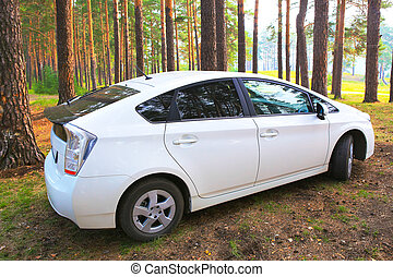 car in the wood
