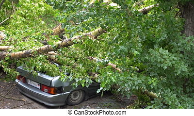 car is crushed by a tree in the park.