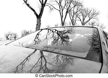 car, nu, refletido, árvores