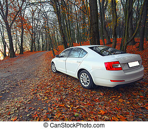 car on a forest path