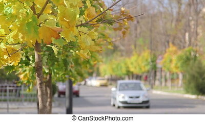 Car on quiet city street in the fall
