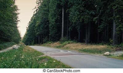 Car Passes On Forest Road Evening