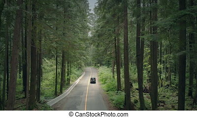 Car Passes Through Forest Aerial - Car drives through the...