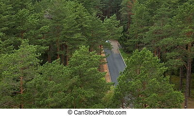 Car passing by asphalt road deep in the forest