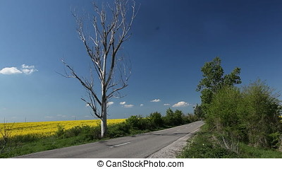 Car Passing by Dried Tree on Road along Rapeseed Field - Car...