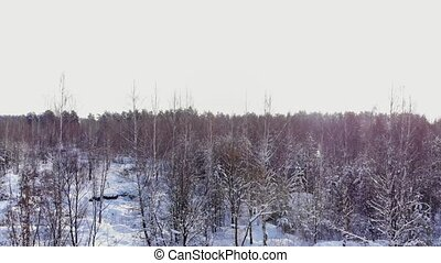 Car rides by road in snow-covered forest. Footage. Rays of...