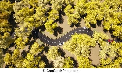 Car traffic Yellow Autumn forest nature road landscape. Beautiful fall nature Top view 4k