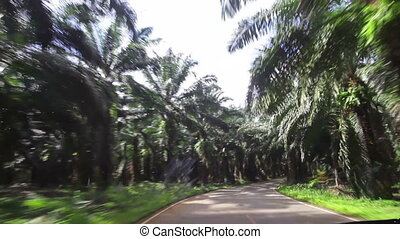 car traveling on the paved road of date palms