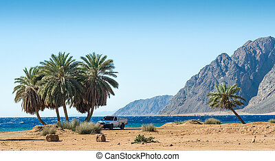 car under the palm trees on the Red Sea in Egypt