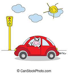 car, vermelho, vaca, dirigindo