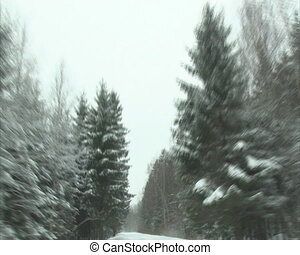 car window view forest