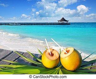 caraíbas, coquetel, cocos, árvore, folha palma