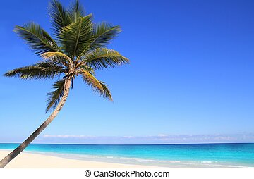 caraíbas, palma coco, árvores, em, tuquoise, mar