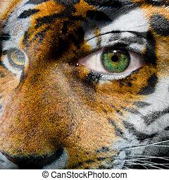 cara, con, ojo verde, pintado, con, tigre siberiano