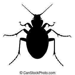 Carabus Coriaceus Beetle - Vector illustration of carabus ...