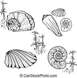 caracóis, escudos mar