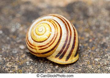 caracol, abandonado, concha, shell., vacío
