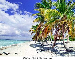 caraibico, domenicano, tropicale, republic., mare, spiaggia