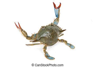 caranguejo azul