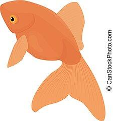 Carassius auratus. Gold Fish isolated on white - Carassius ...