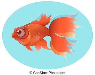 Carassius auratus - goldfish, red fin and tail , gold squama...