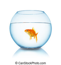 Carassius auratus in a fishbowl - A goldfish in a fishbowl...