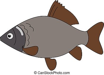 Carassius fish, illustration, vector on white background.