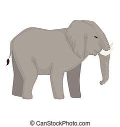 carattere, elefante, animale africano, selvatico
