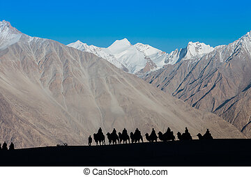 Caravan of travellers riding camels in silhoulette