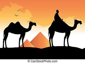 caravana, camello