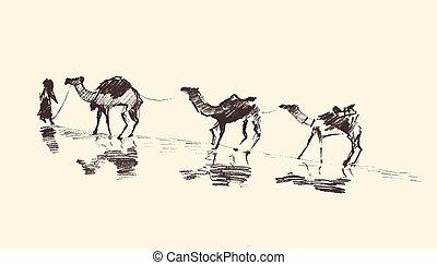 caravana, camellos, desierto, vector, ilustración, bosquejo