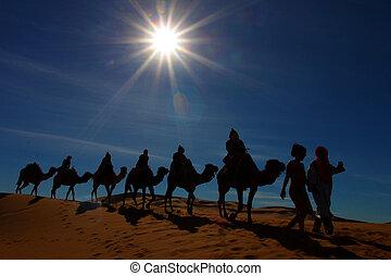 caravana, desierto, sáhara, marruecos, camello