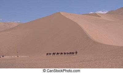 caravane, désert