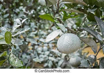 carbonato, blanco, calcio, naranja, árboles