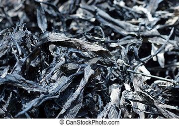 carbonella, cinese, fare, foglie, ink., bambù