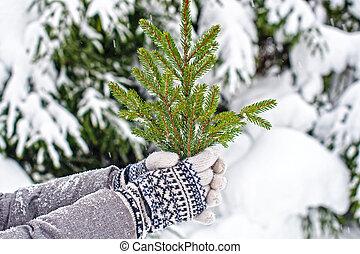 card., 木, fir-tree., 装飾, 2, 一緒に, 編まれる, 手袋, decorations., ブランチ, 手, 把握, クリスマス