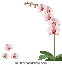 Card pink orchid flowers