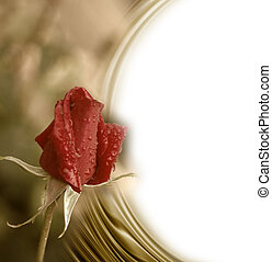 card romantic red rose bud - golden background with blank ...