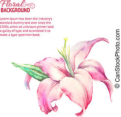 Card with blooming lily. Vector illustration.