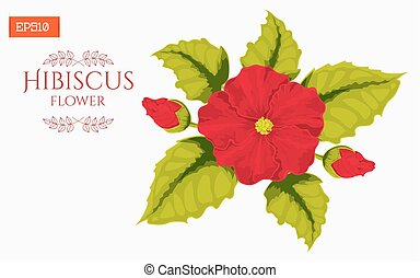 Card with hibiscus flower isolated on white. Vector illustration
