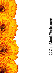 Card with orange flowers