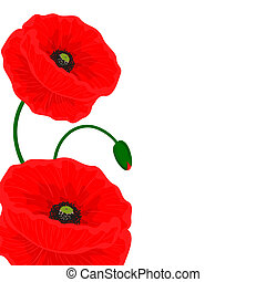 Card with red poppy flowers on a white background and free...