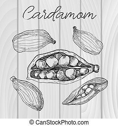 Cardamom isolated on wooden background. Hand drawn vector illustration