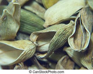 Cardamom pods - spices